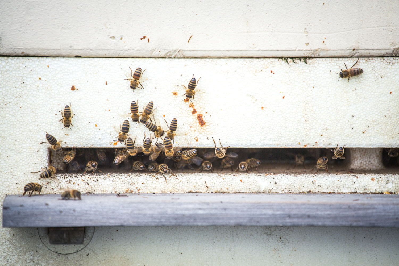 viertel-vor-stadtbienen-erika-mayr-photo-marcus-werner-34