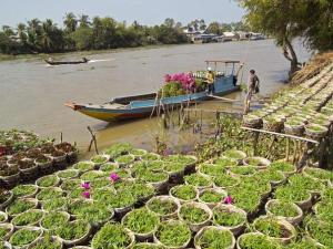 RV River Orchid Cruise Tour from Siem Reap to Saigon - 8 Days