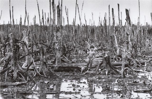 ベトナム戦争枯れ葉剤の被害