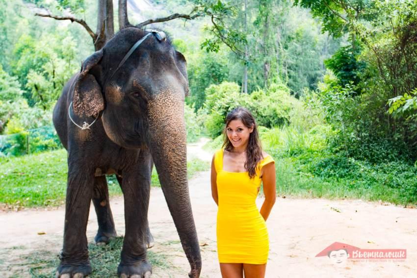 Слониха приближается к девушке