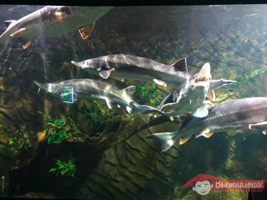 Океанариум (Aquarium) в парке Vinpearl (Фукуок)