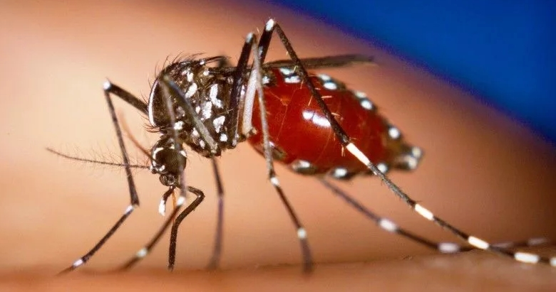 Комар - разносчик