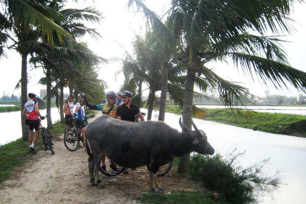 hoi an countryside bicycle tour