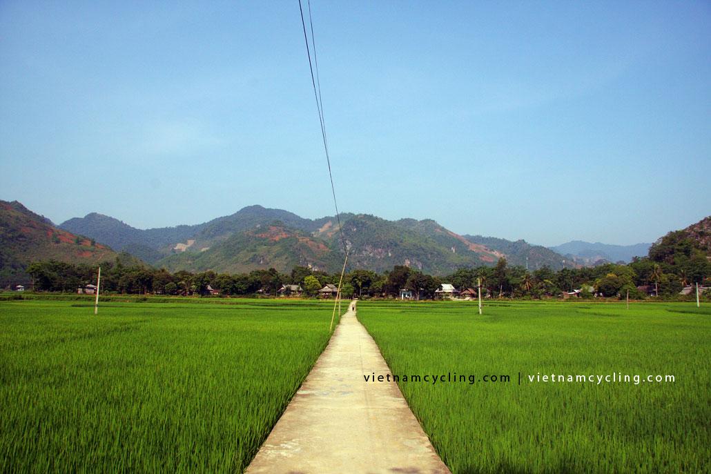 mai chau paddy fields