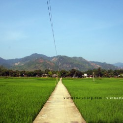 mai chau paddy fields