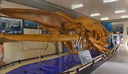 Картинки по запросу фото институт океанографии нячанг