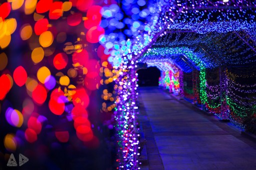 Christmas-Lights-3.jpg