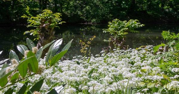 Erste bunte Blüten im Botanischen Garten