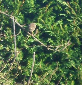 In the top right a chaffinch was paying a visit