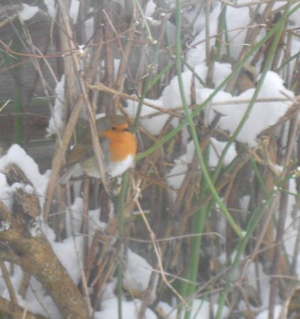 Taken through the window. Lots of reflection, but moving things would have frightened him away