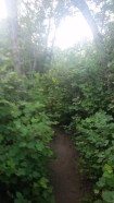 Much of the trail was thick, lush greenery. We didn't expect that.