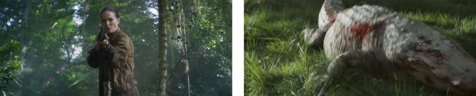 'Annihilation' Cinematography Breakdown | Indy Mogul