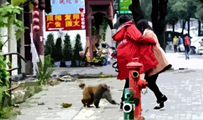 The monkey harassing a couple
