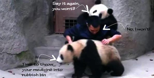 The panda overpowering the carer