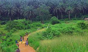 ERA seeks restoration of polluted Niger Delta ecosystems