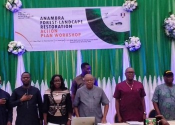 70,000 trees to be planted by NCF in Anambra state
