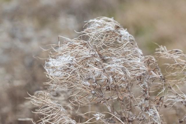 Windy Weeds - Manor Farm, Milton Keynes