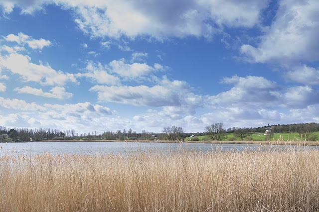 View over Willen Lake North