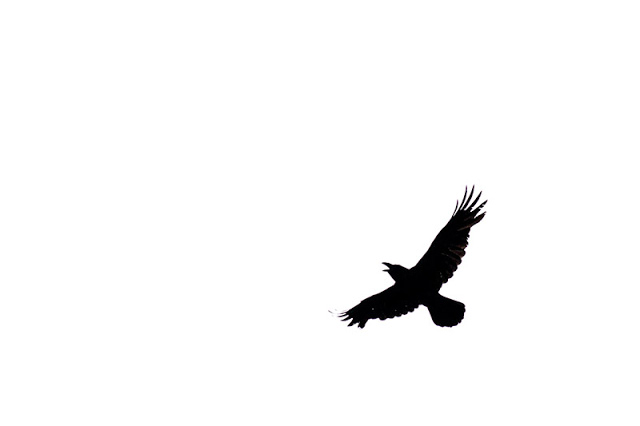 Raven Silhouette in action