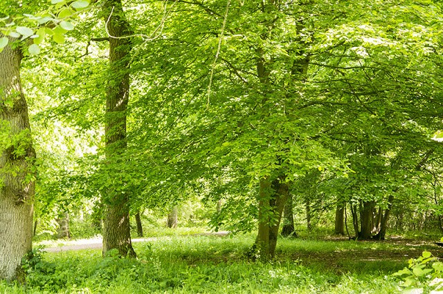 A Tale of Two Woods - Howe Park Wood