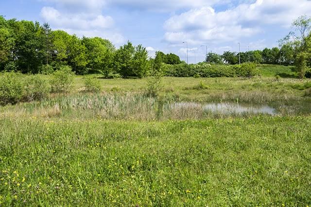 Dragonfly Pond at Howe Park Wood