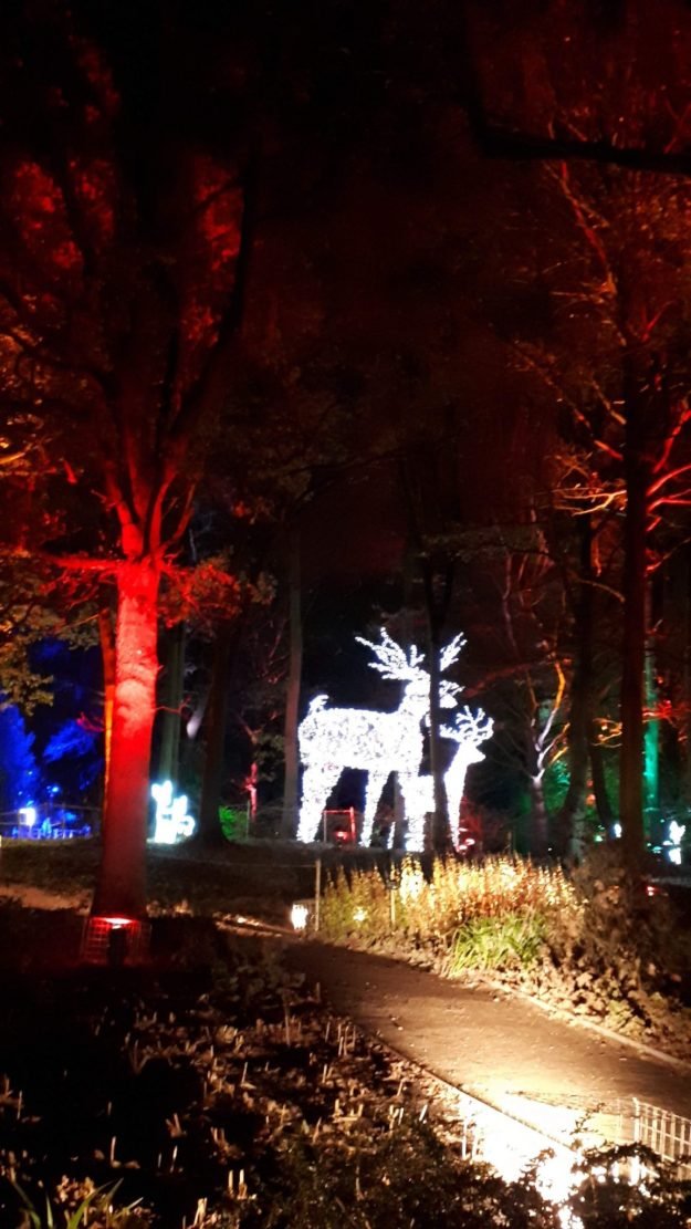 #ChristmasatDunhamMassey two giant reindeer made of lights in the woods with red and blue lights