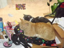 the love cats :)
