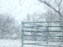 snowy day 074