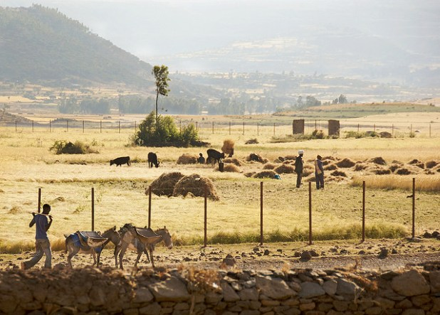 A farm in Axum, Ethiopia. (Photo by A.Davey, Creative Commons License)