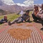 Trading Yarsagumba (Photo by Uttam Babu Shrestha, via The Third Pole)