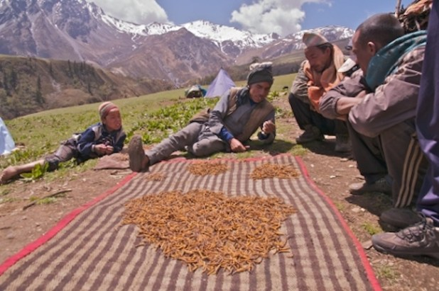 Trading Yarsagumba (Photo by Uttam Babu Shrestha, via The Third Pole)