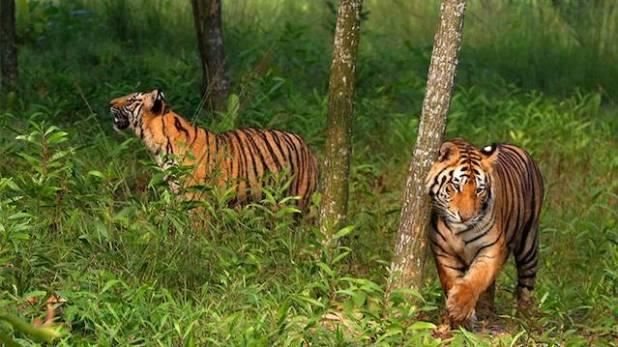 (Photo via Dhaka Tribune)