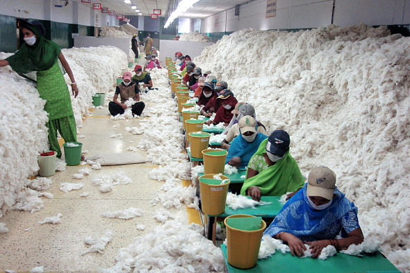 Manually decontaminating cotton before processing at an Indian spinning mill (2010). (CSIRO under a Creative Commons License)