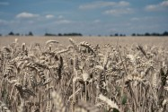 Why Europe Will Let Member States Opt out of GM Crops