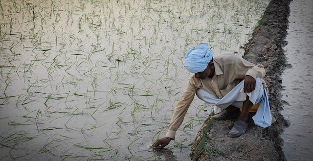 The Myth of South Asian Agriculture Revolution