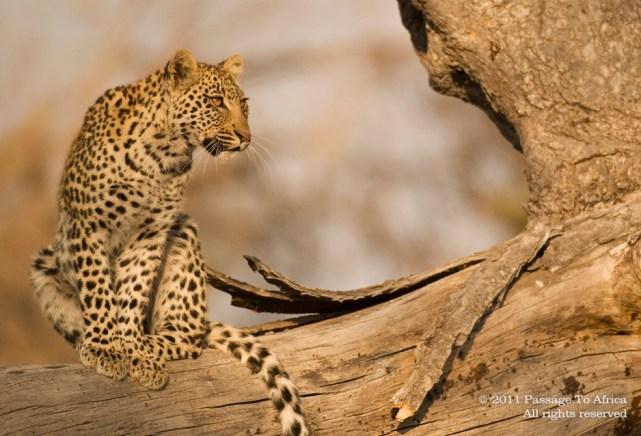 large_wildlife-201