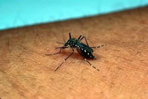 mosquito-800x533