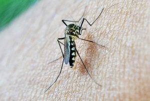 mosquito-213806_1280_2