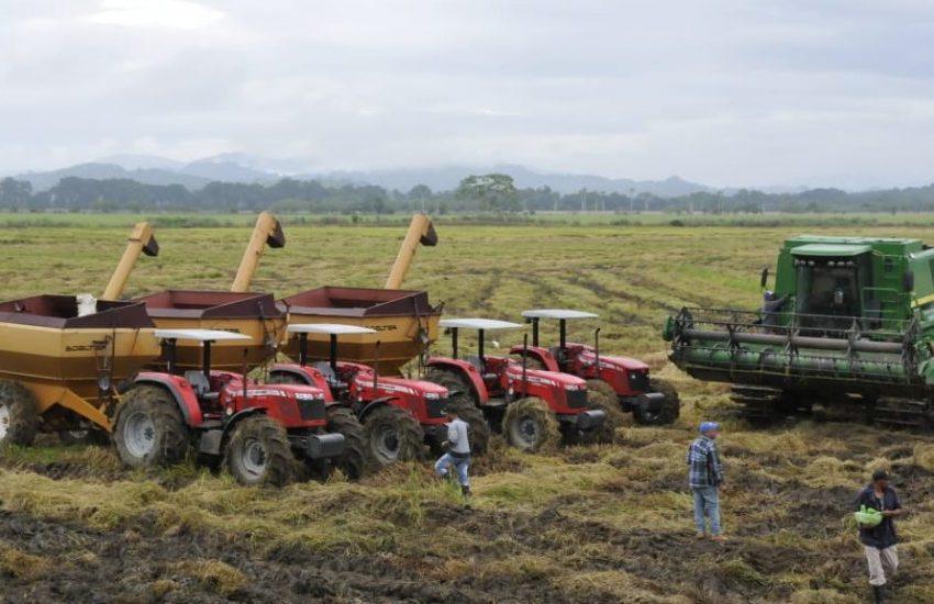 Gobierno dominicano fortalecerá sector arrocero; ministro de Agricultura dice buscan mantener estabilidad de producción del cereal