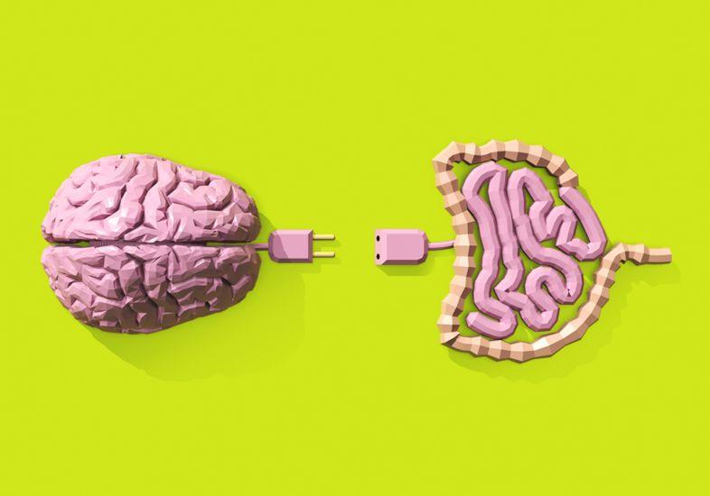 El intestino, un aliado del cerebro en la protección contra virus y bacterias