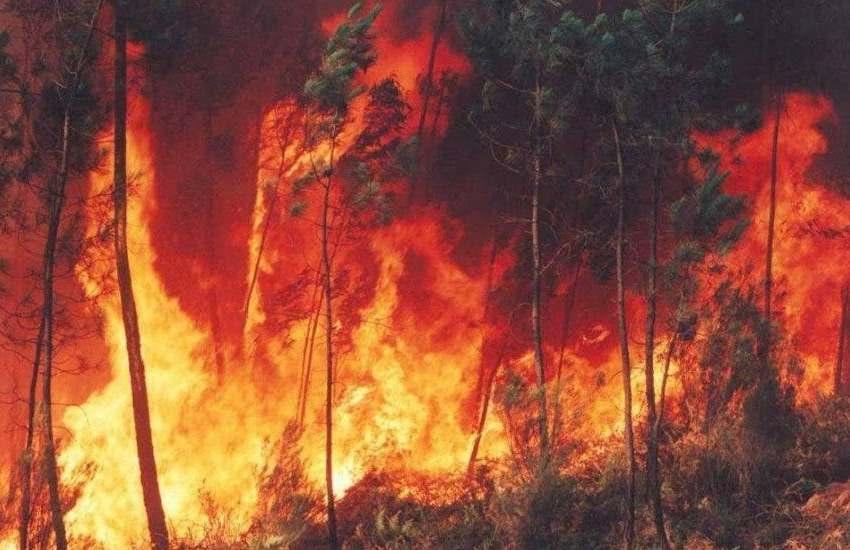 Incendios en la Amazonía brasileña se disparan y crecen un 120 % en octubre