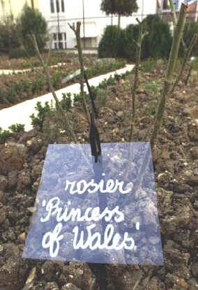 princess_diana_memorial_garden