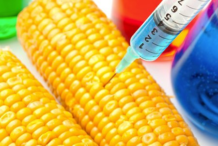 New Hidden Law Allows Monsanto to Plant and Sell GMO Seeds Even if They Are Later Found to be Toxic