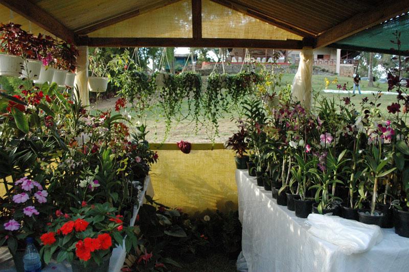 Inician en Jarabacoa 5to Festival de las Flores