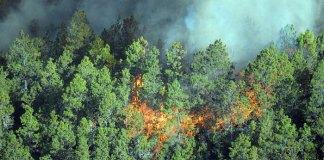 Desde hace varios días el incendio forestal afecta una considerable zona del Parque Nacional de Valle Nuevo.