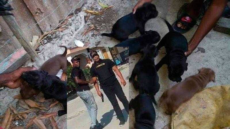 DNCD lamenta muerte perra Pitbull en operativo San Juan de la Maguana