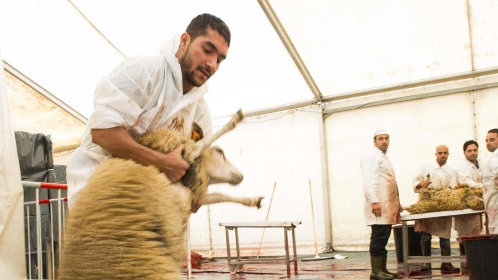 460 carcasses de moutons retrouvées après l'Aïd à Bruxelles: des chiffres en hausse