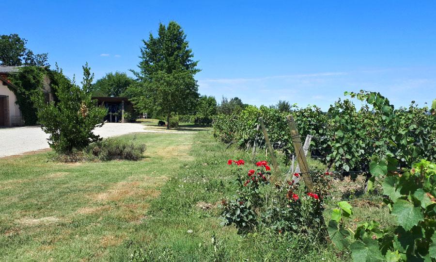 Château Boujac - Vins de Fronton bios