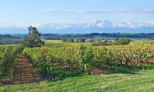 Vineyards of Occitanie - South-West
