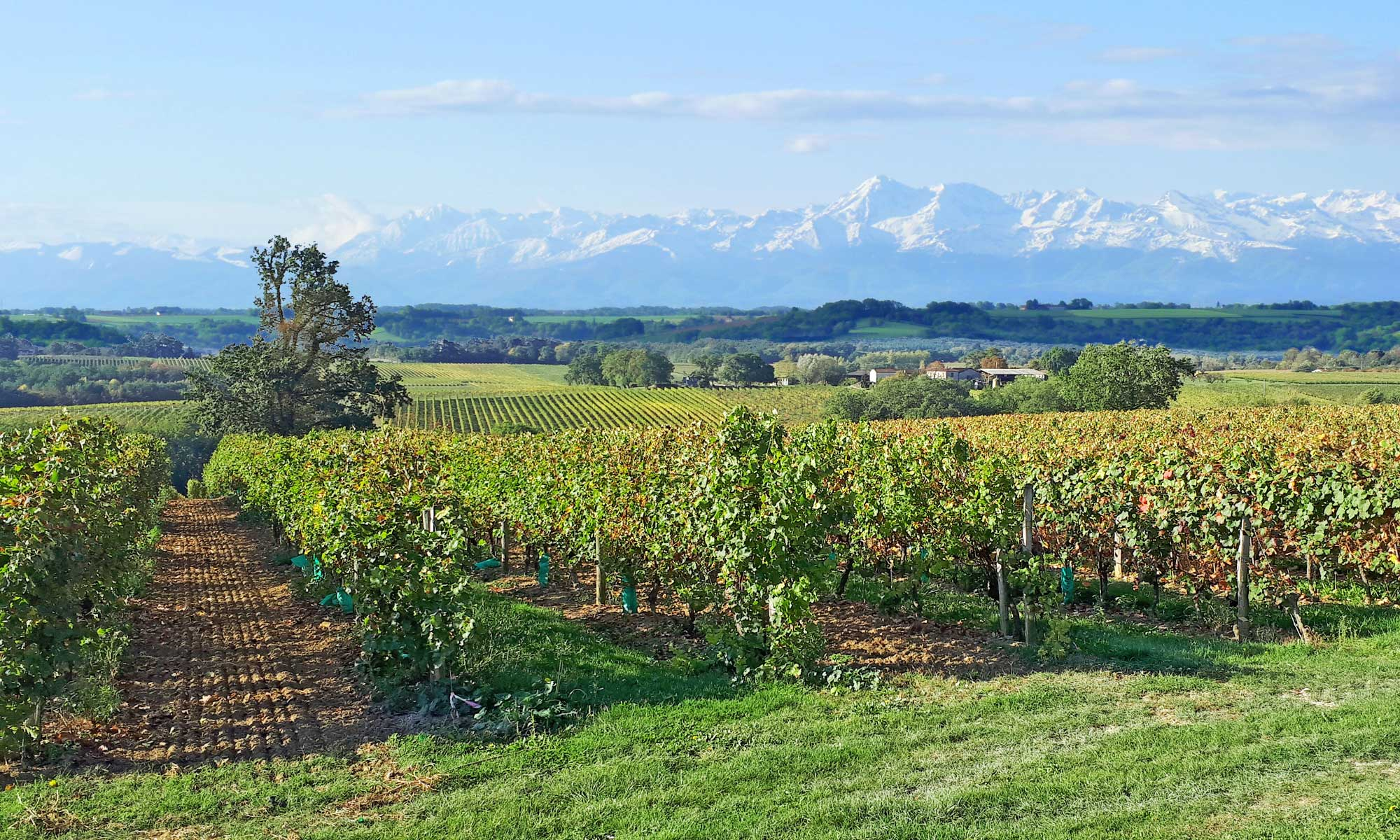 Vignobles d'Occitanie - Sud-ouest